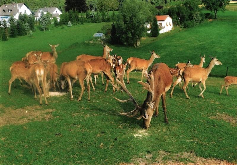 Wildspezialitäten aus dem heimischen Revier und aus der eigenen Jagd